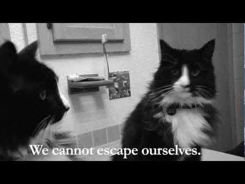 Brilliant video catching the existential ennui of a cat.