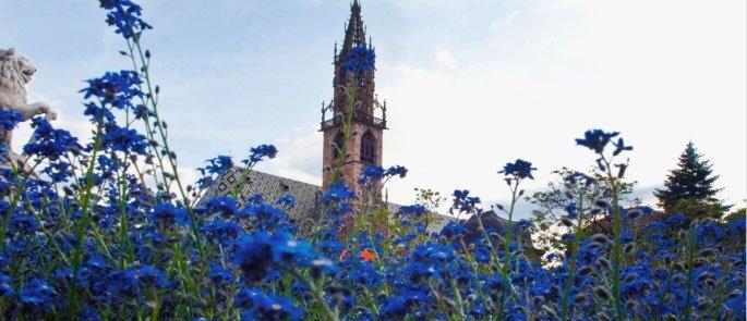 Morgen und Übermorgen findet in Bozen der traditionelle Blumenmarkt statt!! Der Walterplatz erstrahlt in einem Meer aus Blumen.