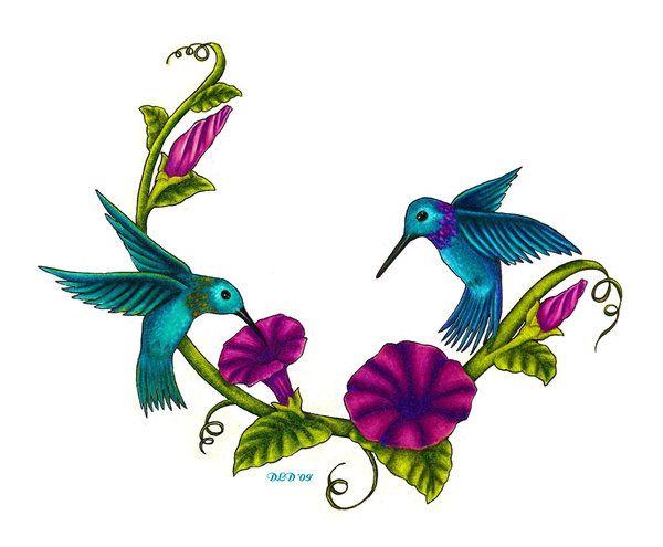 hummingbird graphics - bing