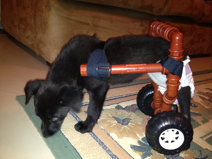 32 Best Images About Diy Dog Wheelchairs On Pinterest