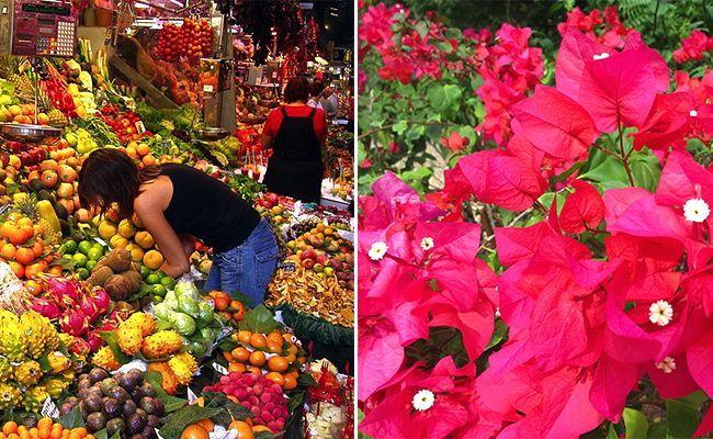 A la derecha la típica flores de trinitaria, generalmente color rojo, pero viene en otros colores.