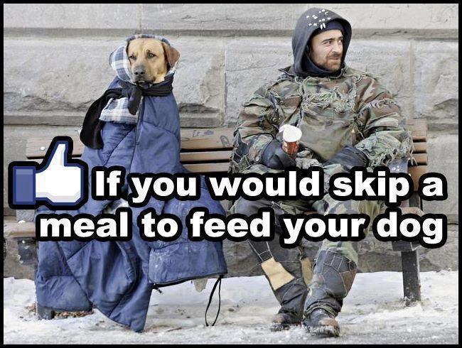 Pin by Margie Manifold on Social Commentary Dogs