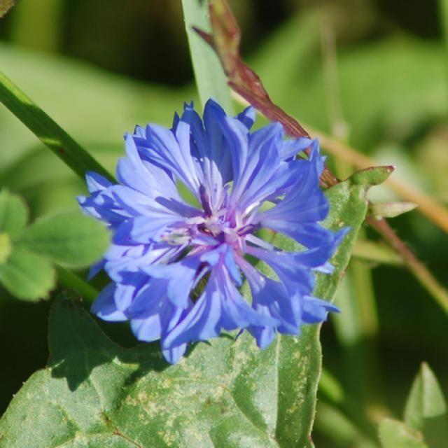 Types Of Wildflowers Photo Guide Wild FlowersBlue