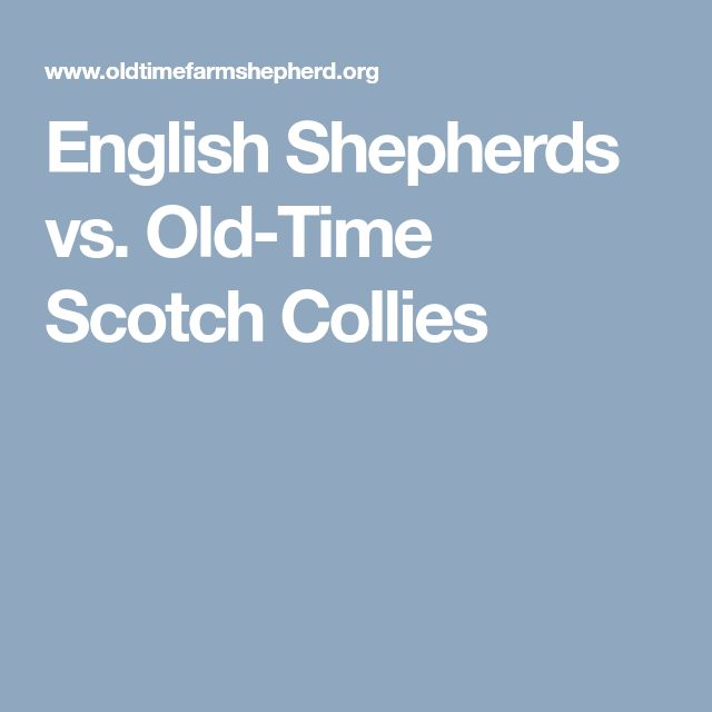 English Shepherds vs. Old-Time Scotch Collies