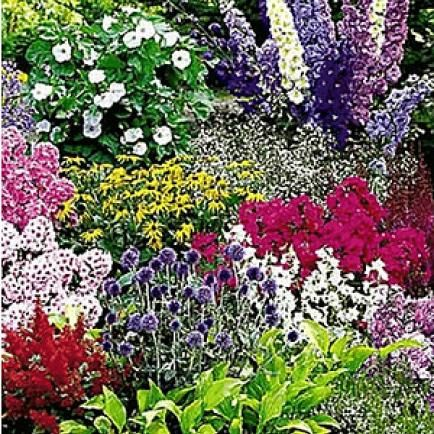 "Buntes Staudenbeet ""Multi-Colour"",12 Pflanzen"
