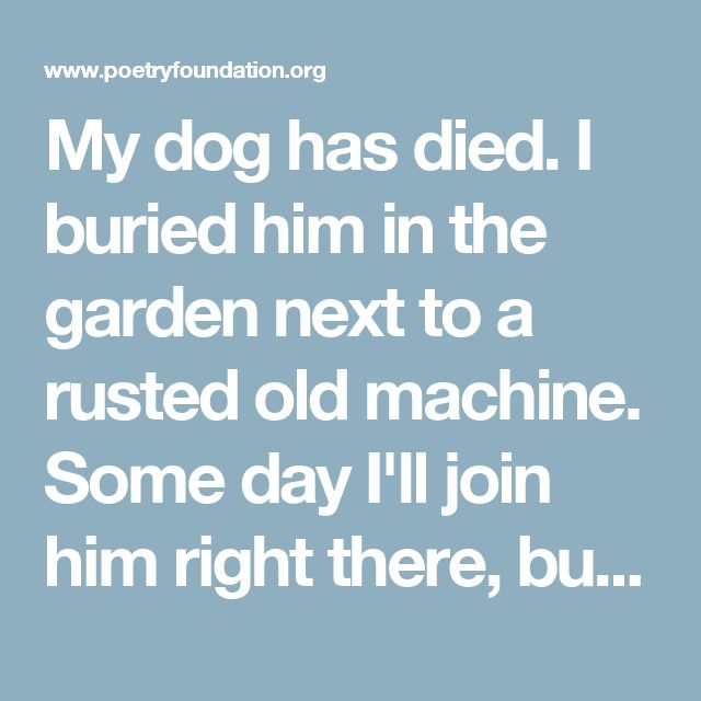 My dog has died.  I buried him in the garden  next to a rusted old machine.   Some day I'll join him right there,  but now he's gone with his shaggy coat,  his bad manners and his cold nose,  and I, the materialist, who never believed  in any promised heaven in the sky  for any human being,  I believe in a heaven I'll never enter.  Yes, I believe in a heaven for all dogdom  where my dog waits for my arrival  waving his fan-like tail in friendship.