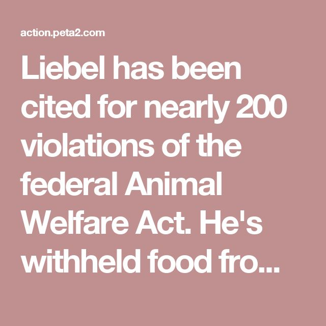 """Liebel has been cited for nearly 200 violations of the federal Animal Welfare Act. He's withheld food from Nosey for """"training"""" purposes and tightly chained her to a tree while she swayed back and forth, and the U.S. Department of Agriculture even worked with a whistleblower who described a horrific beating.  An elephant experthas characterized Nosey's case as """"the worst, most prolonged documented example of an uncorrected case of suffering and abuse in an elephant I have ever reviewed."""""""
