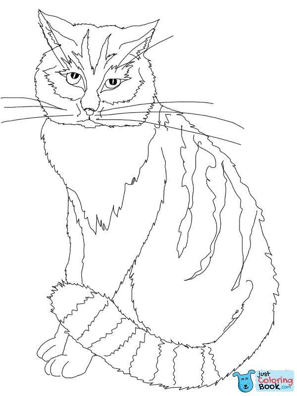 Chinesische Bergkatze Malvorlagen kostenlos druckbare Malvorlagen in Andengebirge …   – Cat Coloring Pages