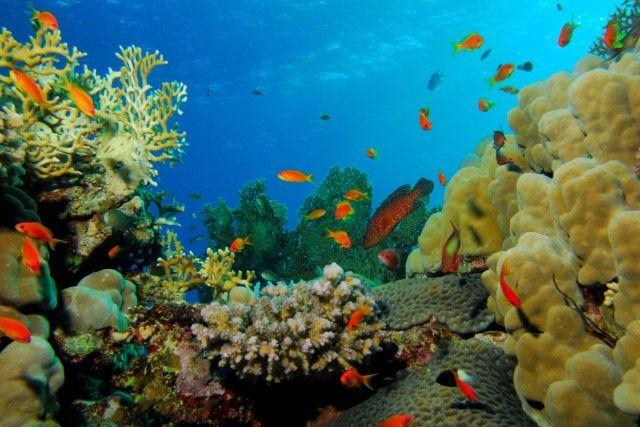 mer Rouge   De la Mer Rouge au Jourdain (1)