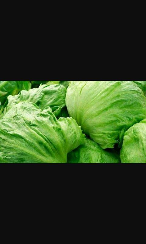 Lettuce-lechuga
