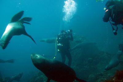 6 Photos Telling You To Visit Robinson Crusoe Island » Cascada Expediciones
