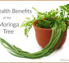 Health Benefits of Moringa and Ways to Use the Tree