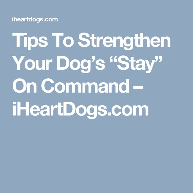 "Tips To Strengthen Your Dog's ""Stay"" On Command – iHeartDogs.com"