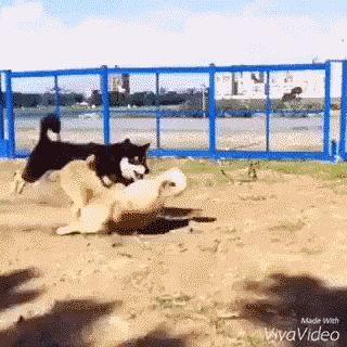 O incrível cachorro paranauê