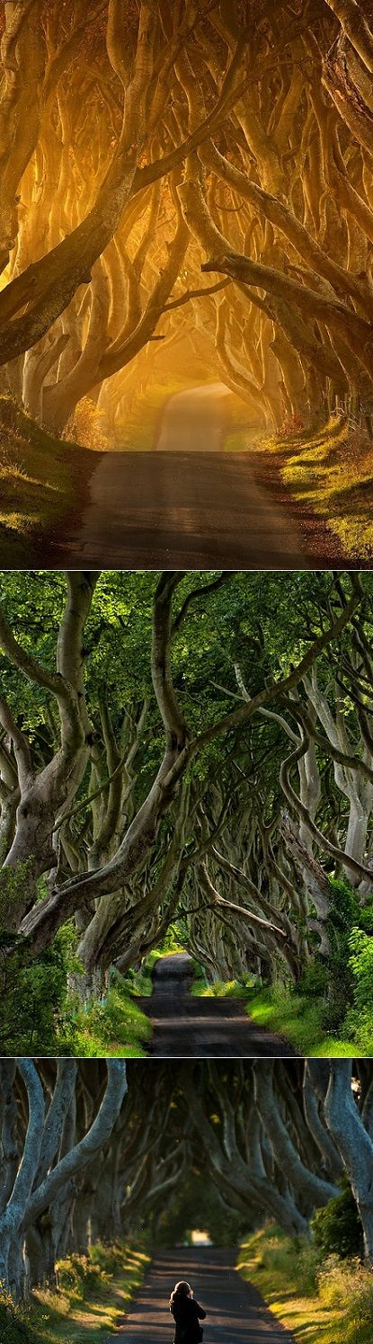 The Dark Hedges - Northern Ireland - County Antrim - I did not get to see this while I was there but want to go back and experience it.
