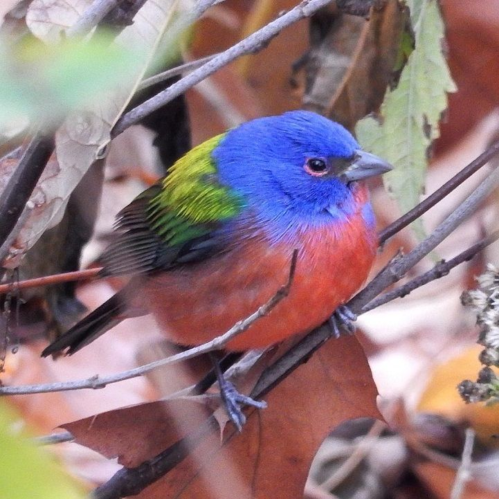 Extremely Rare Multicolored Bird Sighting in New York Attracts Crowds of Avian Enthusiasts - My Modern Met
