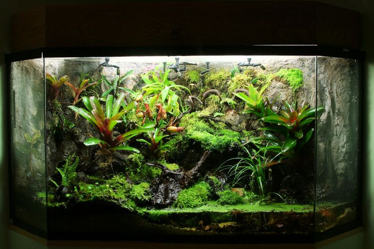 90 Gallon Vivarium - Pic Heavy - Page 3 - Orchid Board ... 10 Gallon Dart Frog Vivarium