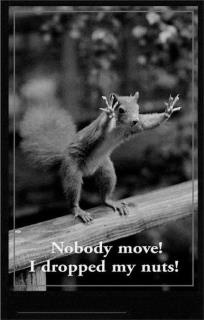 Now that's funny !: Animal Pics, Squirrels, Quote, Writing Prompts Pictures, Tasti Recipes, Nut, Funny Stuff, Pictures Writing Prompts, Funny Animal