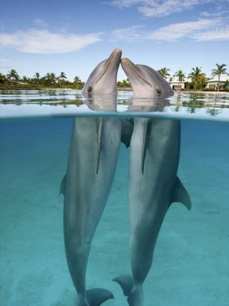 Boo captivity!! Buildings should not be in the background of a dolphin habitat!!!