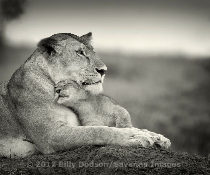 Lioness and Little ONe