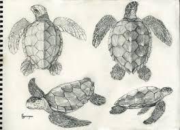 Resultado de imagem para tartaruga cabeçuda desenho