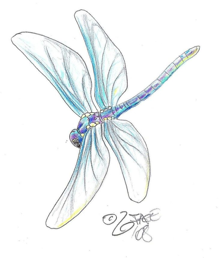 dragonfly pencil drawing
