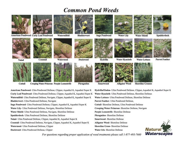 Identificant and Treatment Guide for Common Pond Weeds