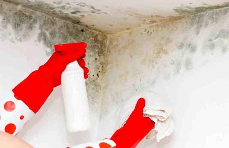 Достала плесень? Она портит не только интерьер. И появиться может где угодно: на кафеле ванной, на кухне и даже в комнатах. По сути, плесень – это колонии грибков, которые выделяют токсичные микроспоры, причем в большом количестве. И это очень неприятно и вредно для здоровья. Прежде все