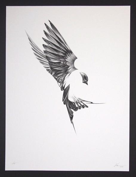 Incredible box set of art prints by Von detailing the movement/anatomy of birds.