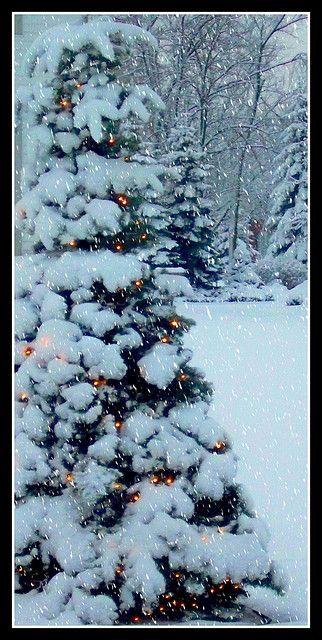 snow and lights. Christmas tree. holidays.