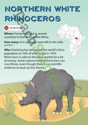 Northern White Rhinoceros Endangered Animal Poster