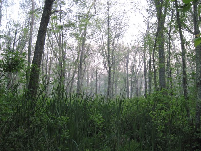 The Hockomock Swamp