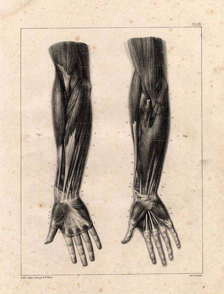138 best MDD Anat. Myology images on Pinterest | Anatomy reference ...