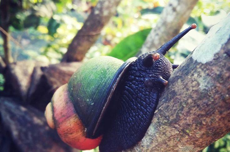 Cute & Colourd Mussel