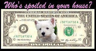 Etsy's Corner: The SAFE Program Promotes Practical Dog Bite Preve...