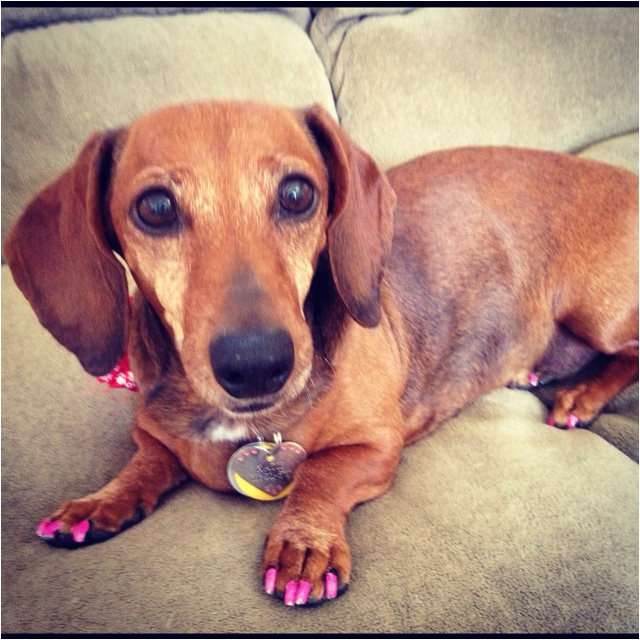 17 best pawdicure images on pinterest dog nails dog cat