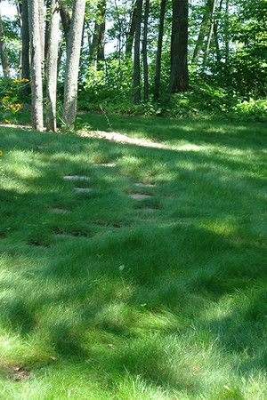 no mow lawn seed mix, great for our area, full sun to partial shade and minimal waterings