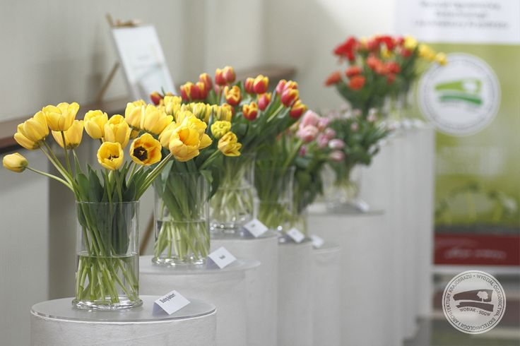 Wystawa tulipanów zorganizowana przez Katedrę Roślin Ozdobnych w kwietniu 2016 r. / Tulip exhibition organized by Department of Ornamental Plants, April 2016 #forystyka #tulipany #KRO #floristry #tulips