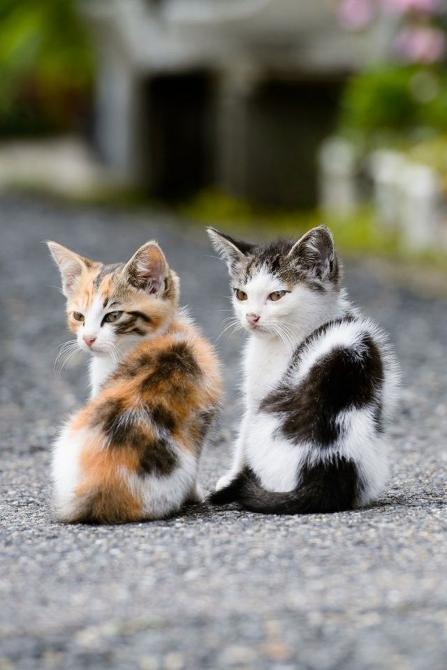 391 best Mobile Wallpapers images on Pinterest | Adorable ...