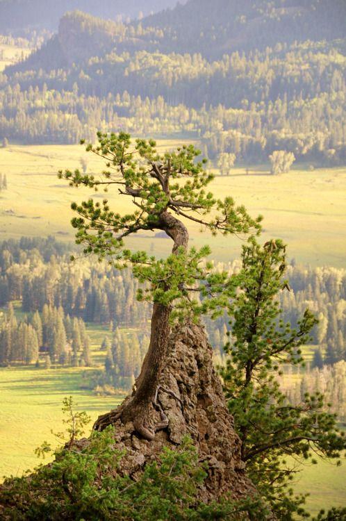 Interesting picture.  Looks like pine    ☮Serene Bohohere☮
