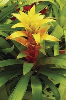 bromeliad pups care instructions