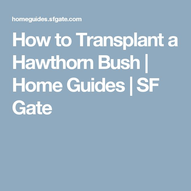 How to Transplant a Hawthorn Bush | Home Guides | SF Gate