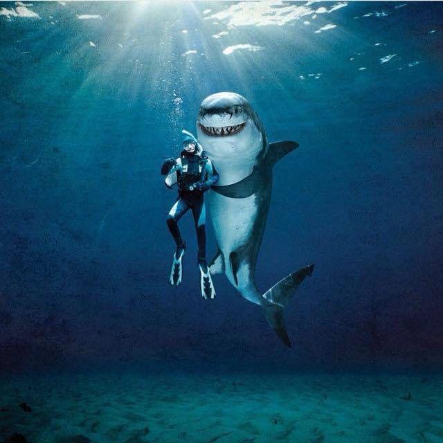 Открытки, картинка прикольная акула