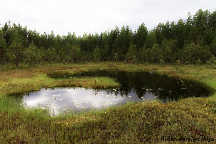 Dream swamp, Seitseminen national park, Finland.