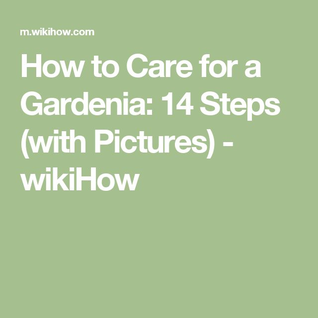 How to Care for a Gardenia: 14 Steps (with Pictures) - wikiHow