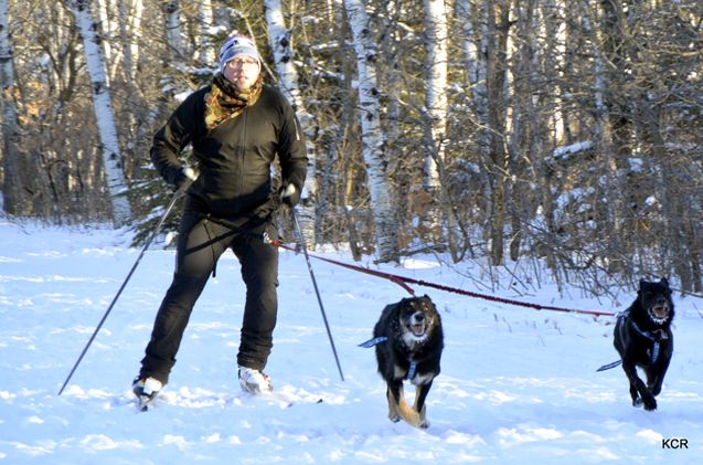 Kev Roberts, our go-to guy for skijoring, kicksledding, and dog-scootering from Skijor OxfordDogs, introduces you to the sport of skijoring.