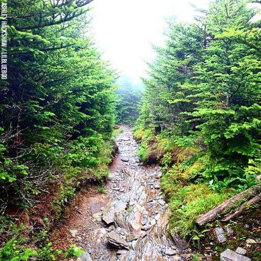 17 Best Images About Mt. Leconte On Pinterest