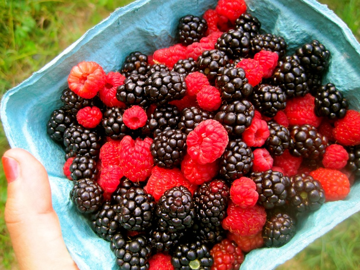 Fresh Summer Fruit Salad from Cookingcollegechick.wordpress.comSummer Fruit, Fruit Salad
