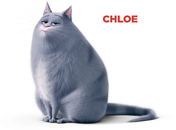 Chloe a füle botját sem mozdítja rád, kivéve ha valami finom csemegét viszel neki. Hasonlóan a legtöbb macskához ő is teljesen uralja a saját világát. Ha kell, terjedelmes, bundás testét tálakba vagy dobozokba préseli, vagy megvédi területét az apró, ártalmatlan tengerimalactól. Nem a legaktívabb macska, de beveti magát a barátaiért, ha minden kötél szakad... Vagy ha van náluk kaja.