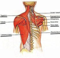 Pulled Back Muscle Symptoms
